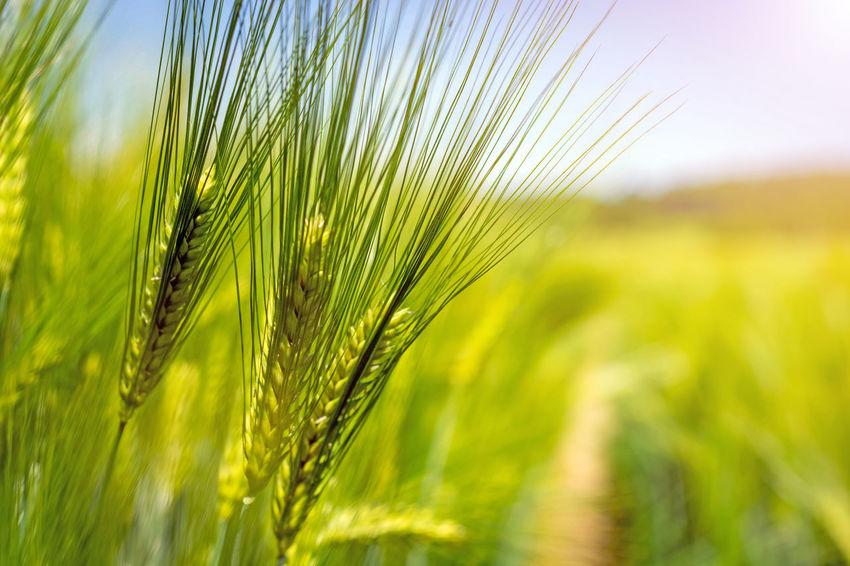 Ubezpieczenie rolne 3