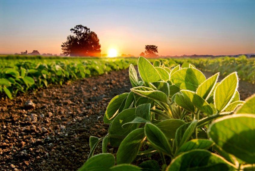 Ubezpieczenie rolne 5