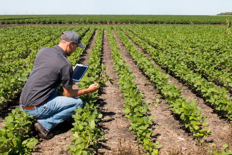 Ubezpieczenie rolne 6